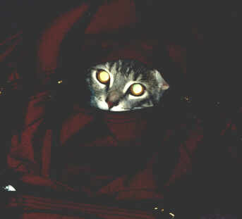 Cat in the Sack